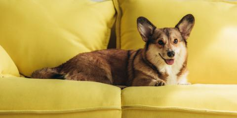 5 Ways to Protect Furniture From Pets, ,