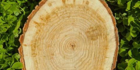 4 Reasons Why You Shouldn't Put Off Stump Removal, Newport-Fort Thomas, Kentucky