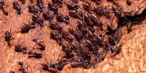 5 Signs You Need Termite Control, Savannah, Georgia