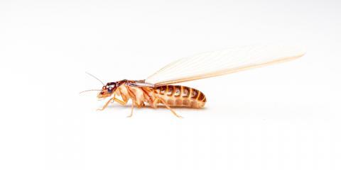 Termite Control: 5 FAQ About Termites, Savannah, Georgia