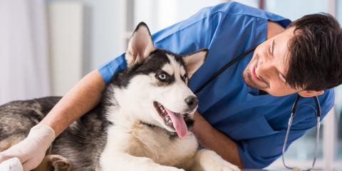 3 Outstanding Benefits of Pet Dental Services, Buckeye Lake, Ohio