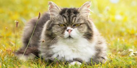 5 Useful Senior Pet Care Tips for Cats, Buckeye Lake, Ohio