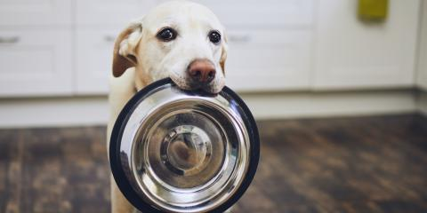 3 Reasons a Healthy Diet Is Important for Your Pet, Buckeye Lake, Ohio