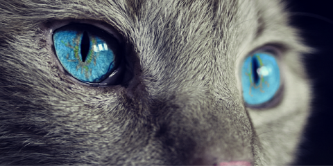 How Animal Care is Addressed Holistically, Buena Vista, Colorado
