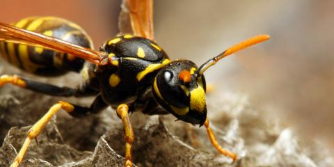 4 Steps to Handle Wasps Around the Home, Maineville, Ohio