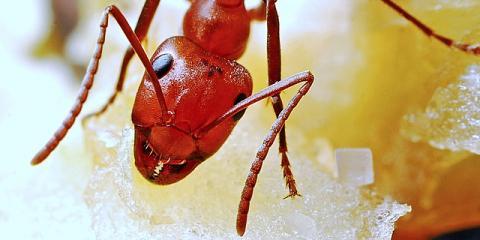 Call Lexington's Best Bug Extermination Service to Avoid Ants This Spring, Lexington-Fayette, Kentucky
