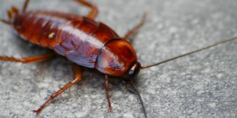 3 Tips for Effective Cockroach Control From Minneapolis Experts, Eden Prairie, Minnesota