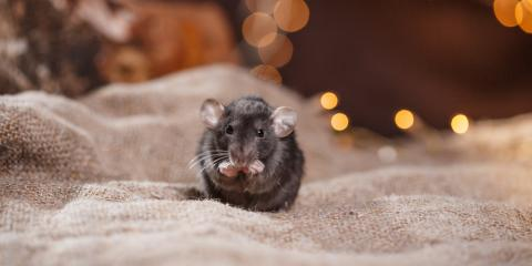 Residential Pest Control Pros Share Tips to Prevent Mice Infestations in Winter, 2, Maryland
