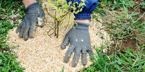 why professionals should mulch your garden in spring affordable
