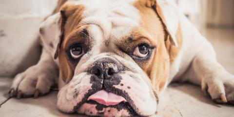 Ohio's Pet Dermatology Expert Explains What to Do About Allergic Reactions in Animals , Sharonville, Ohio