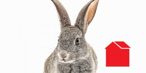Bargain Outlet Stores Will Be Closed Easter Sunday., Walpole, Massachusetts
