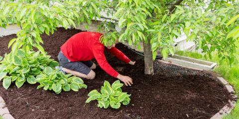 The Do's & Don'ts of Mulching Around Trees, Burlington, Kentucky