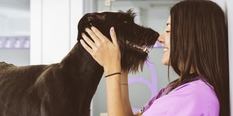 3 Must-Have Business Insurance Policies for Animal-Related Services, Honolulu, Hawaii