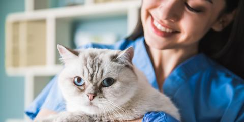 4 Types of Business Insurance Veterinarians Need, Robertsdale, Alabama