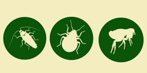 Bed bugs can take over an entire home, Mobile, Alabama