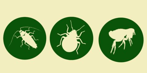 B & W Pest Control, Pest Control, Services, Mobile, Alabama