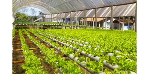 3 Helpful Indoor Gardening Tips, Aurora, Colorado