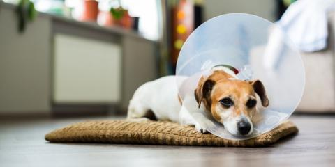 3 Affordable Alternatives to the Classic Cone of Shame , Elk Grove, California