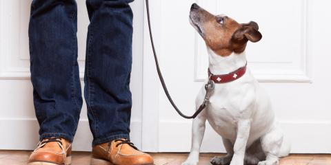 3 Tips for Creating a Pet-Friendly Mudroom, Greenburgh, New York