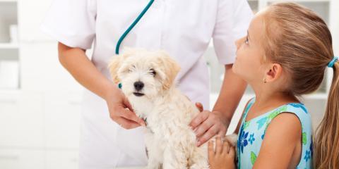 3 Reasons Pet Vaccinations Are So Important, York, Arkansas