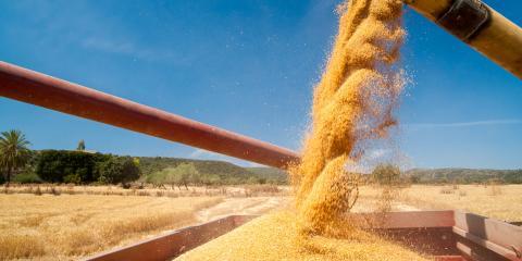 How to Store Grain Long-Term, Cairo, Georgia