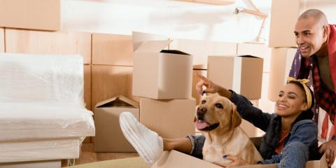 4 Tips on Prepping Pets for Relocation, Cambridge, Minnesota