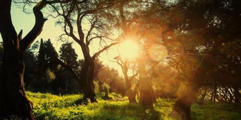 How Climate Change Affects a Forest Management Plan, Camden, Arkansas