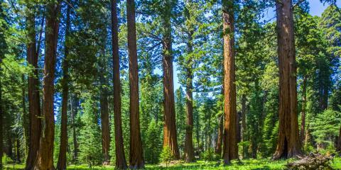Top 3 Reasons to Get a Timber Appraisal, Camden, Arkansas