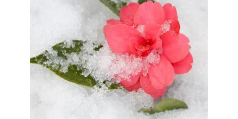 Does your landscaping look a little boring this winter?, Lancaster, South Carolina