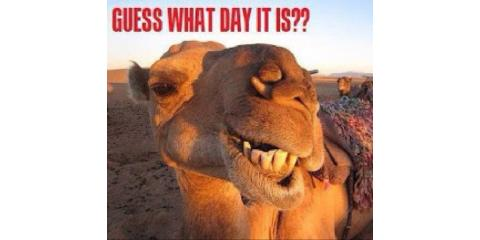 HUMP DAY SPECIAL, Staten Island, New York