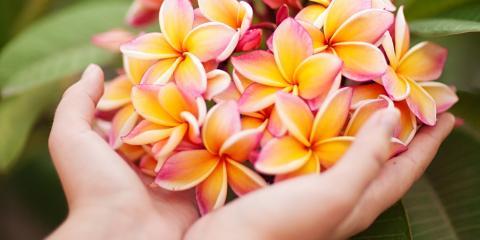 Can You Grow Native Hawaiian Plants in Your Yard? , Koolaupoko, Hawaii