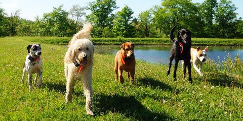 3 Reasons to Leave Your Pet at a Dog Boarding Facility While on Vacation, Manhattan, New York
