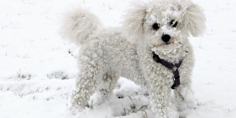 Dog Boarding Experts Explain Why You Shouldn't Leave Your Pets Outside in the Winter, Piner-Visalia, Kentucky