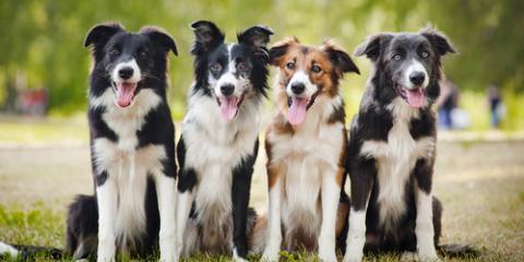5 Common Dog Training Mistakes to Avoid, Nicholasville, Kentucky