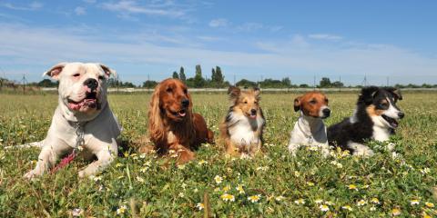 Pet Safety Experts Spotlight Top 3 Dangerous Flowers, Nicholasville, Kentucky
