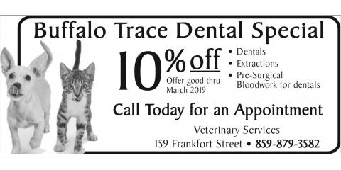 Get a Healthy Start to 2019 With Discounted Dental Pet Care, Versailles, Kentucky