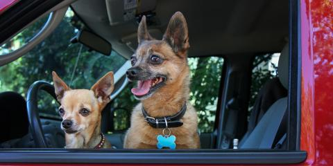 3 Tips for Protecting a Dog While Driving, Cookeville, Tennessee