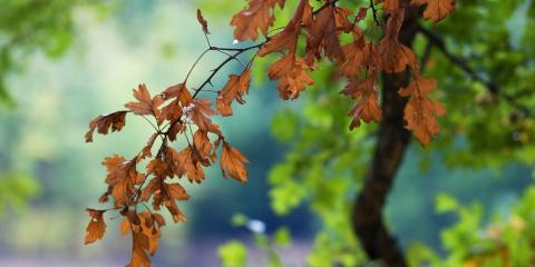 What You Should Know About Deciduous Trees, Anchorage, Alaska