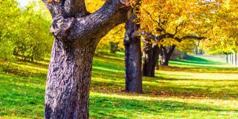 Top 4 Reasons to Invest in Professional Tree Pruning Service, Anchorage, Alaska