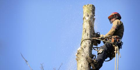A Tree Trimming Company Explains Why Sick Trees Are Dangerous, Anchorage, Alaska