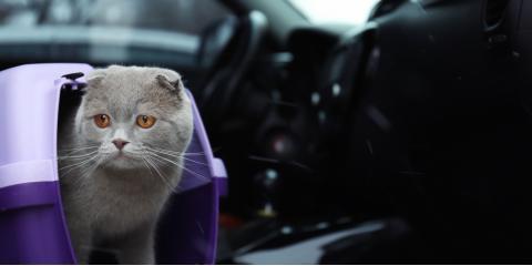 3 Tips to Keep Animals Safe During a Move , Cincinnati, Ohio