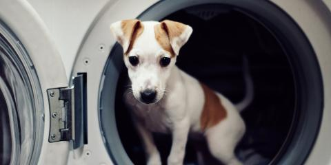 3 Common Behavioral Issues With Puppies, Sanford, North Carolina