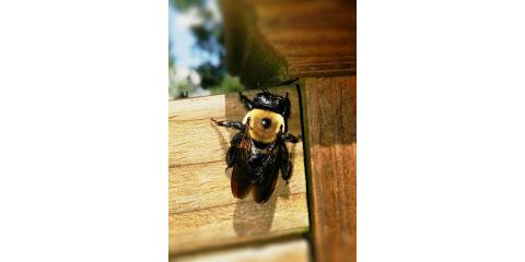 Pest Of The Week: Carpenter Bees, Amelia, Ohio
