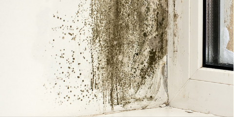 Beware of Mold This Spring—A Kenai Peninsula Carpet Cleaner Service Explains, Kalifornsky, Alaska
