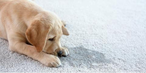Common Carpet Cleaning Mistakes to Avoid, Chillicothe, Ohio