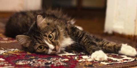 3 Health Benefits of Carpet Cleaning, Dothan, Alabama
