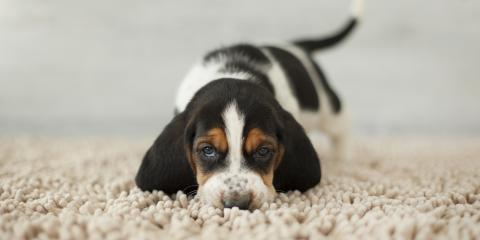4 Carpet Cleaning Tips for New Pet Owners, High Point, North Carolina