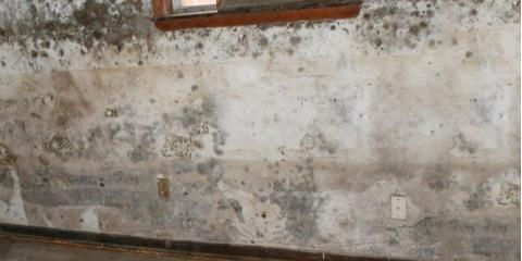 Mold Awareness Month: What Is Mold & How Can a Carpet Cleaning Company Help?, Kalifornsky, Alaska