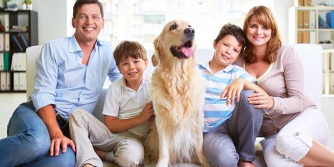 3 Carpet Cleaning Tips for Pet-Friendly Homes, Lincoln, Nebraska
