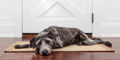 4 Ways to Protect Your Carpets This Winter, Texarkana, Texas